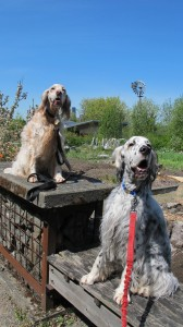 blueskydogs