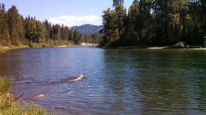 riverdog