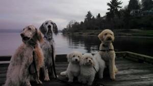 dockdogs2